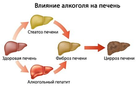 схема влияния алкоголя на печень